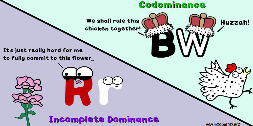 incomplete dominance vs codominance science with the amoeba sisters. Black Bedroom Furniture Sets. Home Design Ideas