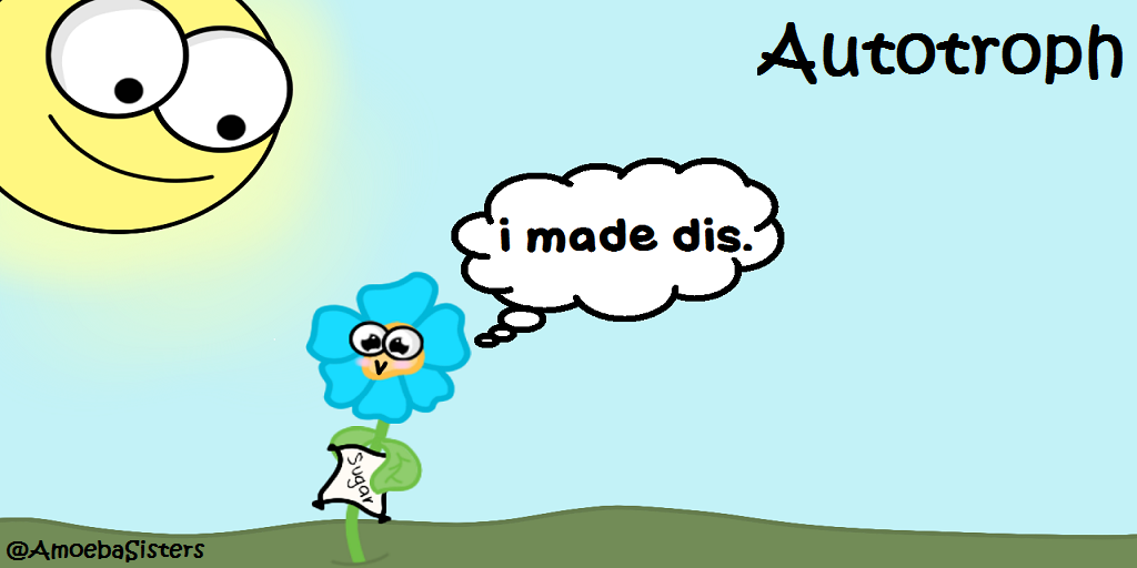 Autotroph vs. Heterotroph - Science with The Amoeba Sisters